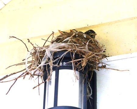 Bird Nest at Lynde House Museum